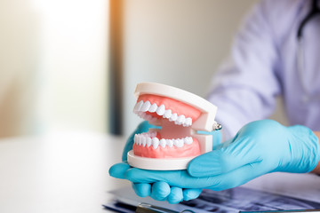 Dentist holding dentures in office room.