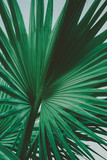 Palm Leaves. Vintage background. Retro toned poster. - 248092290