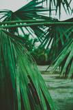 Palm Leaves. Vintage background. Retro toned poster. - 248092413