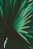 Palm Leaves. Vintage background. Retro toned poster. - 248092470