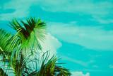 Coconut palm tree under blue sky. Vintage background. Retro toned poster. - 248092855