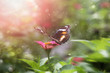 beautiful flower with butterfly - 248098447