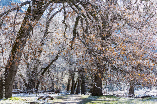 Early spring in Yosemite - 248099246