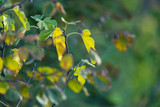 Close-up of autumn leaves in sunlight. - 248120409