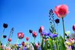 Leinwanddruck Bild - Blumenwiese im Frühling