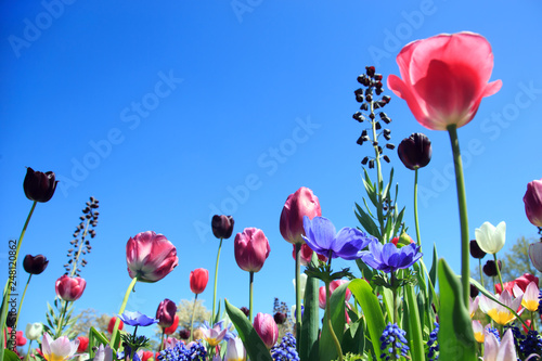 Leinwanddruck Bild Blumenwiese im Frühling