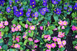 Flowers for background or texture. Violets.