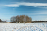Small grove and field covered with snow, white cloud on blue sky - 248136204