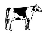 Eine gefleckte Kuh