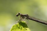 dragonfly - 248197086