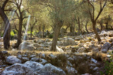 Rocky hillside with growing trees on a sunny day. - 248205489
