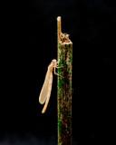 Libelle Dragonfly Metamorphosis 094 - 248209820