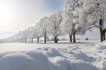 Eichenallee mit Raureif und Schneefläche bei Ebersberg, Bayern