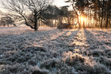 sunrise in frosted forest during winter