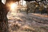 morning sunshine behind pine tree - 248247421