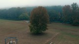 Drone shot of large tree in the middle of an Arkansas grass air strip with campers and an airplane - 248253496