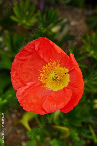 flowers in the garden - 248278603