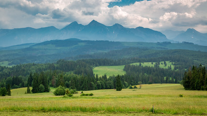 Green meadow and Tatra mountains in summer, Poland