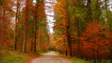 Colorfull Cansiglio forest in autumn. The ancient Forest of the Doges of the Republic of Venice.