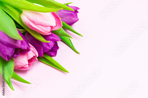 Bouquet of purple and pink tulips on a light pink background. With copy space. Valentines Day, 8 March, Mother and Women's Day concept.