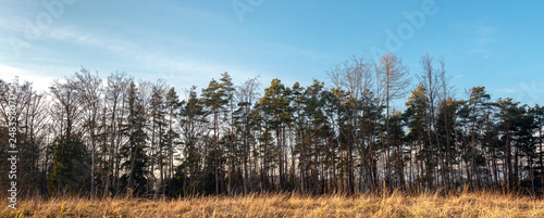 Banner Wald mit Gras im schneelosen Winter - 248353070