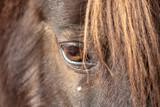 Eye of black horse