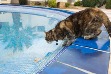 Cute cat drinking water from swimming pool