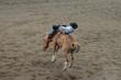 Rodeo Rider in Cody, Wyoming - 248441459