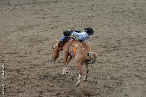 Rodeo Rider in Cody, Wyoming