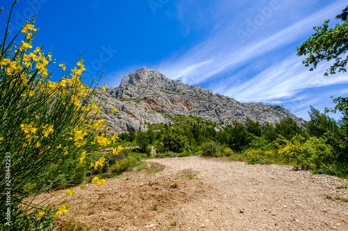 Vue sur la montagne Sainte-Victoire en printemps. Fleurs de genêt au premier plan. Provence, France.
