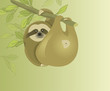 Sloth. Folivora. Slow and lazy animal. Mammals in the jungle. Sloth hanging on a branch. Funny animals. - 248443407