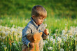 Child in spring. A small boy among dandelions on a meadow. Springtime view. A child with a teddy bear blows dandelions.