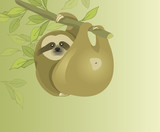Sloth. Folivora. Slow and lazy animal. Mammals in the jungle. Sloth hanging on a branch. Funny animals.