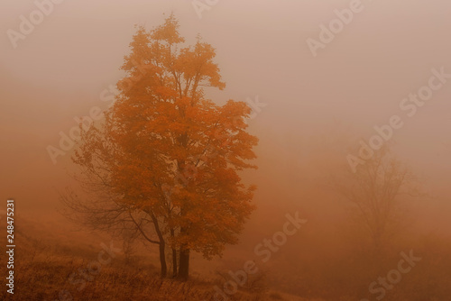 Autumn morning © Optikus