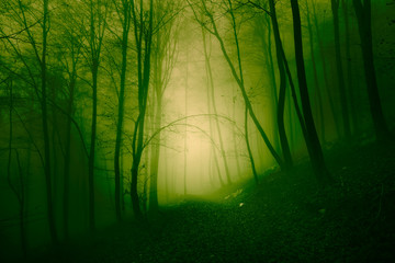 Mystical yellow green foggy forest © robsonphoto