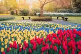 Fototapeta Tulipany - Keukenhof Gardens, flowers and tulips. Netherlands © ronnybas