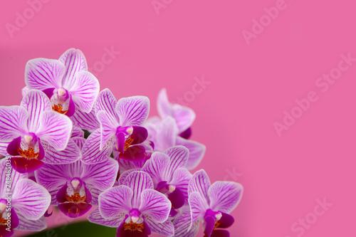 Beautiful pink orchid closeup. - 248485035