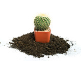 Small cactus photos in black growing soil separated on a white background