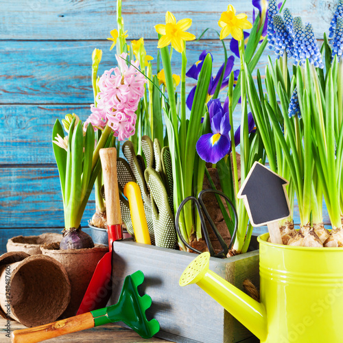 Gardening tools and seedling of spring flowers for planting on flowerbed in the garden. Horticulture concept.