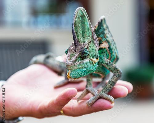 Reptile - a class of vertebrates