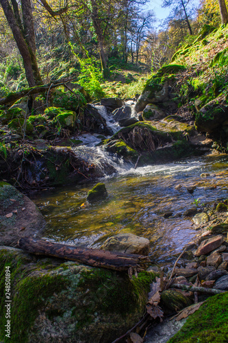 river in the forest - 248501894