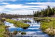 Roadside pond, Sir Richard Squires Memorial Provincial Park, Newfoundland, Canada