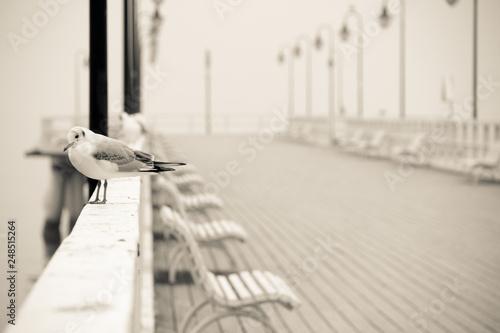 Mewa na molo © Piotr
