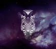 Galaxy Zebra face wallpaper