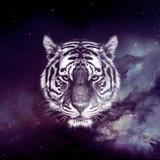 Galaxy Tiger face wallpaper
