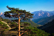 Leinwanddruck Bild - Tree in Seoraksan National Park, South Korea