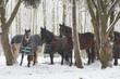 Leinwanddruck Bild - Pferdeherde mit Schneeflocken