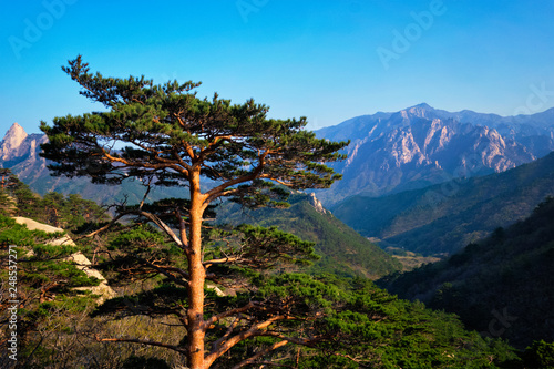 Leinwanddruck Bild Tree in Seoraksan National Park, South Korea