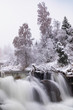 winter landscape with river and trees - 248576465