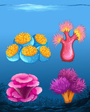 Set of different coral reef